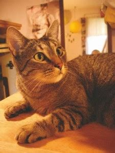 Infamous Online Forum Teams Up to Help Mauled Cat - Catster
