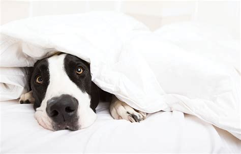 Attention dog owners: For healthy sleep, don't let Fido