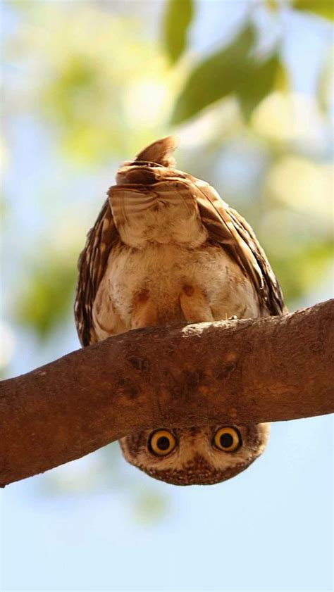 Owl Looks From Under Tree Branch | LuvBat
